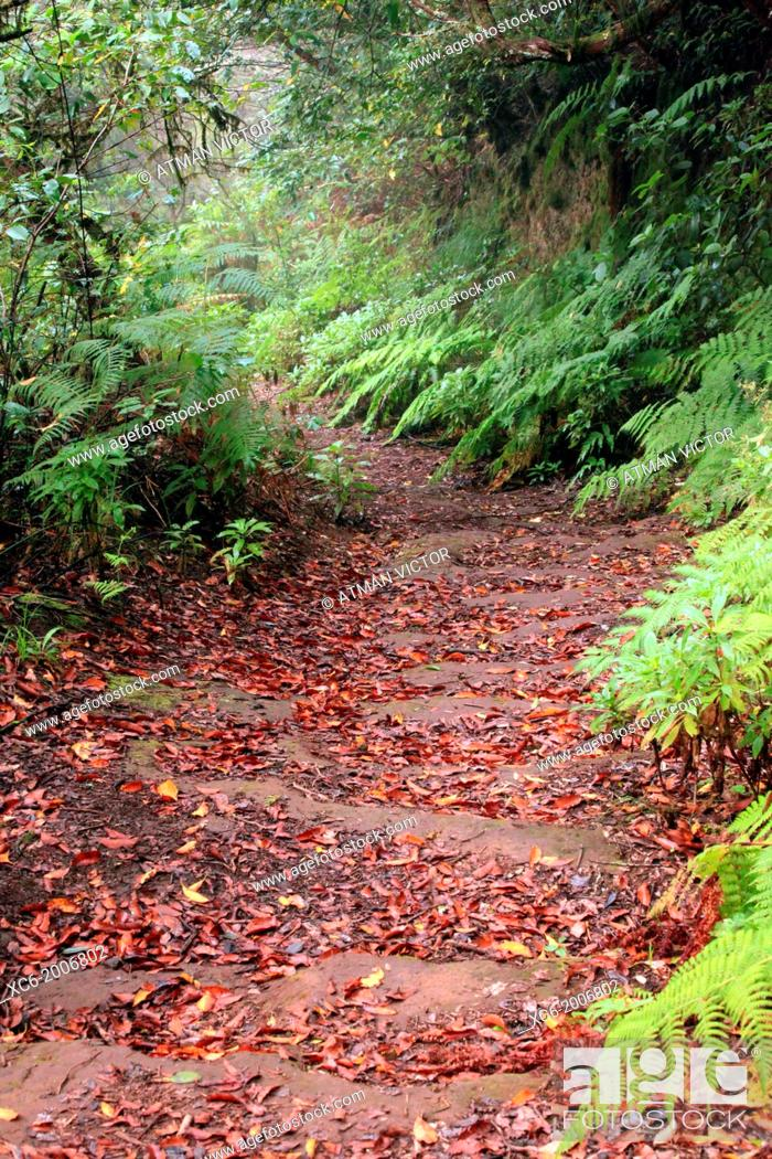 Stock Photo: path or trail in Anaga forest . Tenerife island. spain.