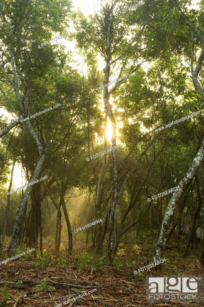 Stock Photo: Rays of light shining through a forest.