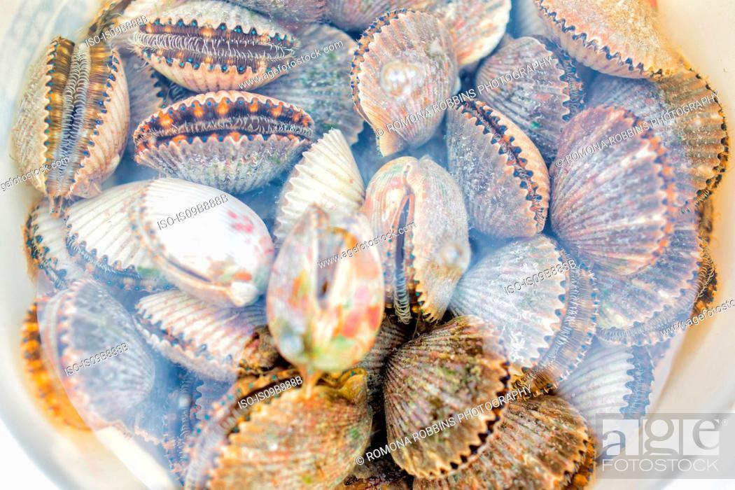 Stock Photo: Bucketful of fresh scallops.