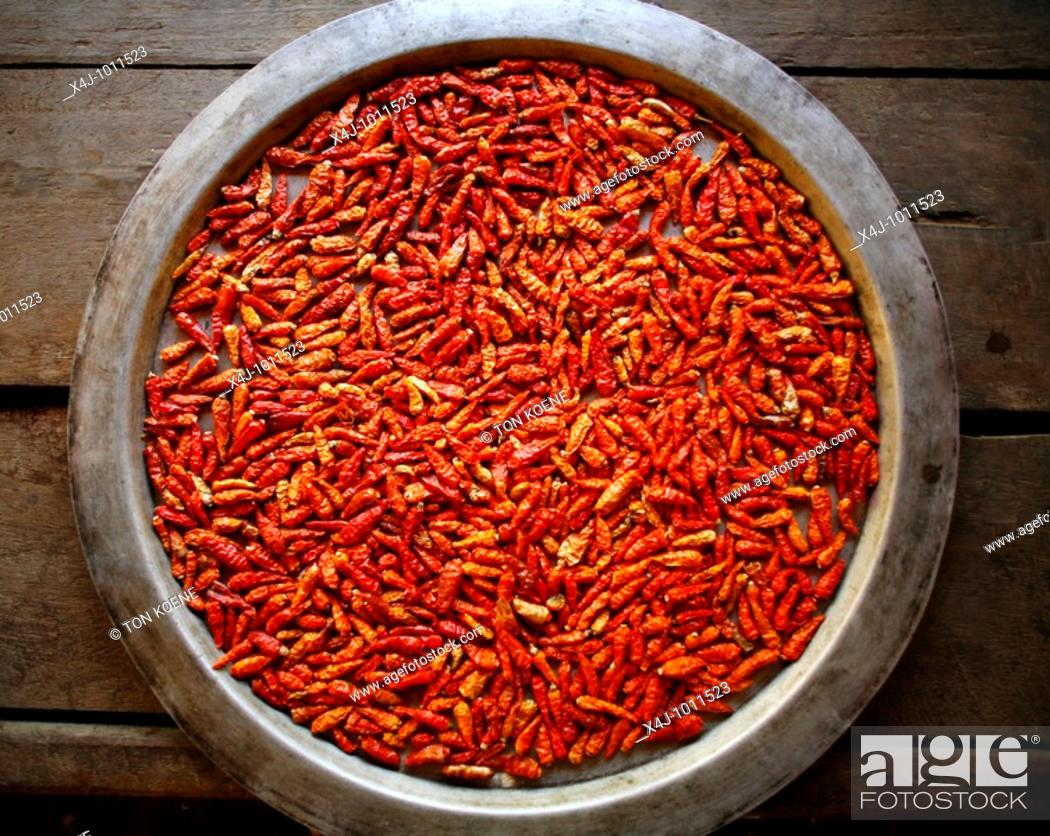 Stock Photo: Closeup of a bowl of red chillies  Approximately 300 Burmese refugees in Thailand are members of the indigenous group known as the Longnecks  The largest of the.
