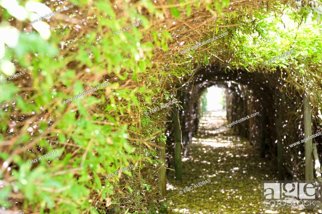 Stock Photo: Narrow path passing through a tunnel.