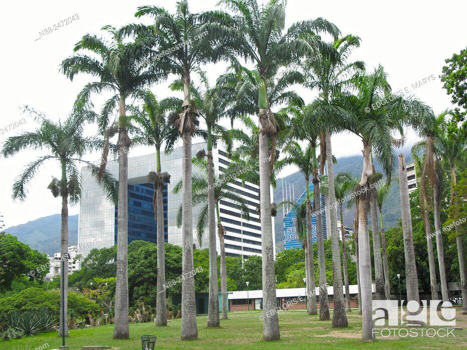Stock Photo: Parque Cristal building view with palms, Parque del Este, Caracas, Venezuela.