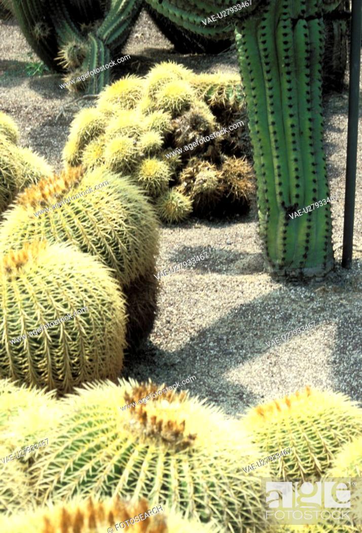 Stock Photo: spitze, ball, balls, Bernhard, cactaceae, cacti.