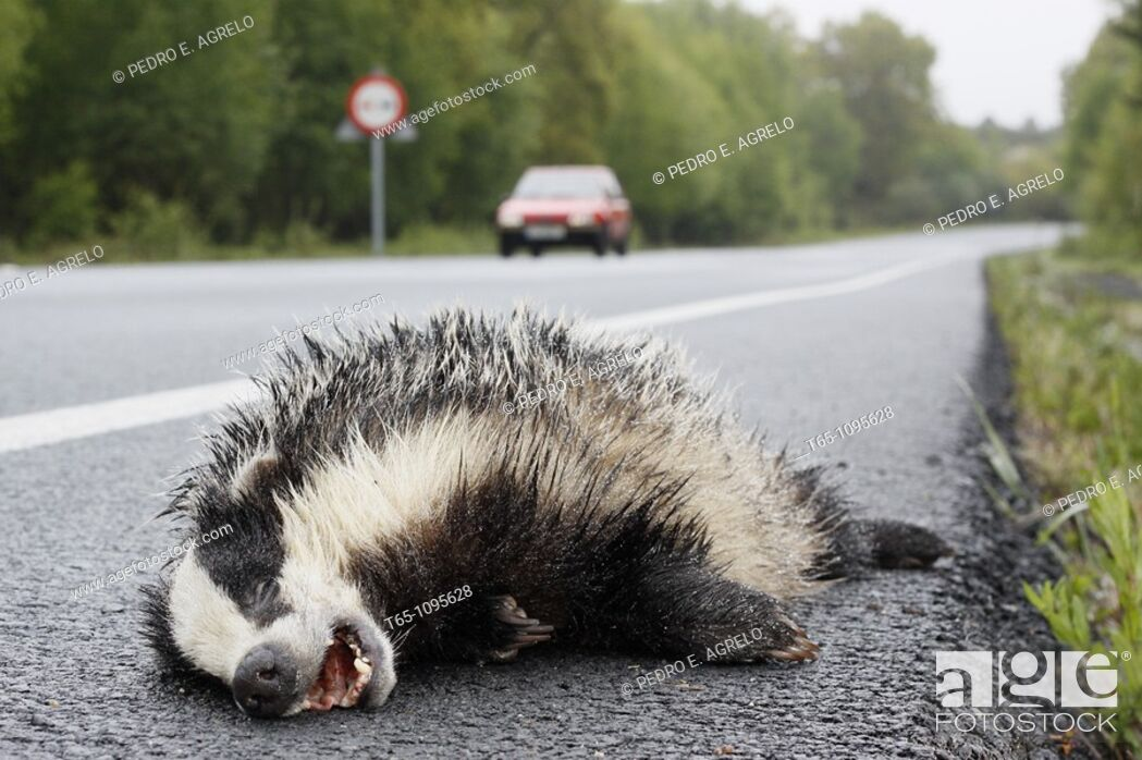 Imagen: Dead animal on the road.