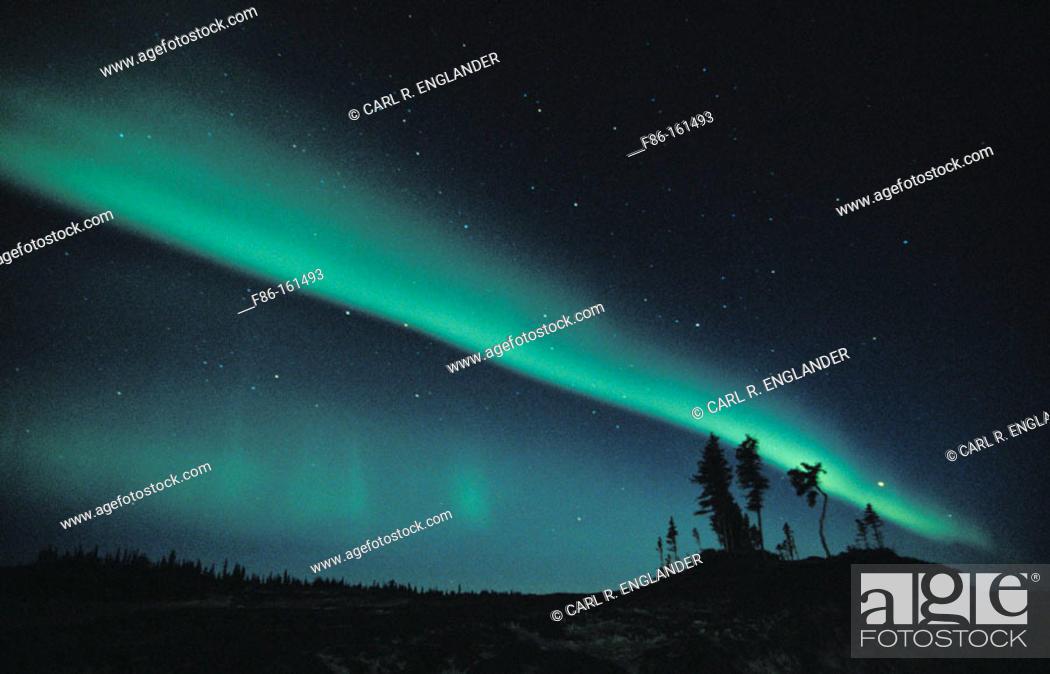 Stock Photo: Northern Lights (aurora borealis) with tree silhouettes, Northwest Territories, Canada.