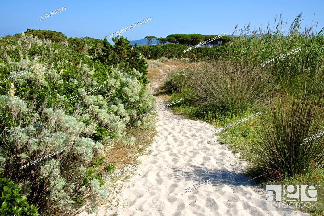 Stock Photo: Sandy path to the beach, scrub plants and pine trees in the background, Costa degli Oleandri, near Ottiolu harbour, Sardinia, Italy.