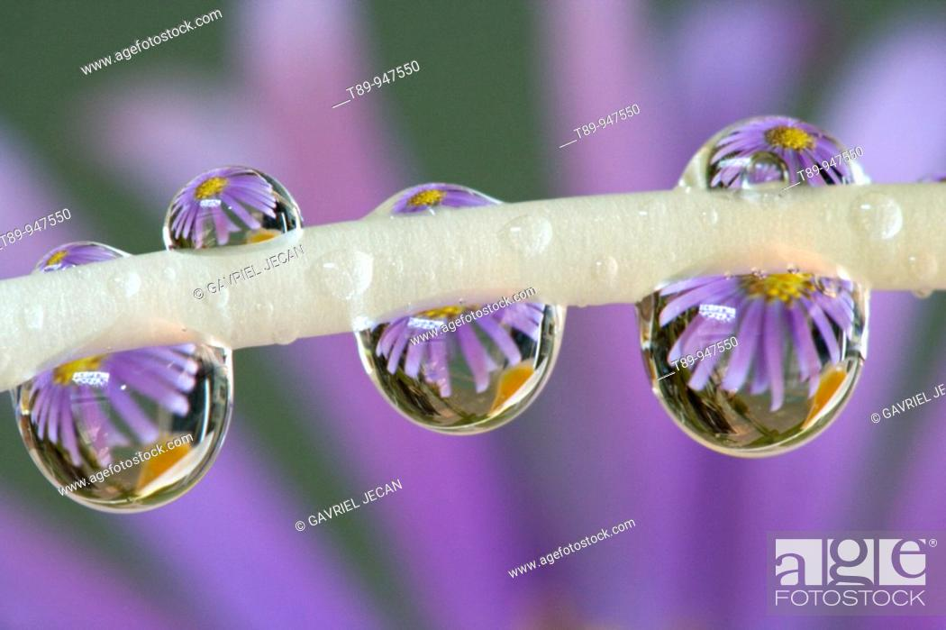 Stock Photo: Flower reflected in the Dew Drops.