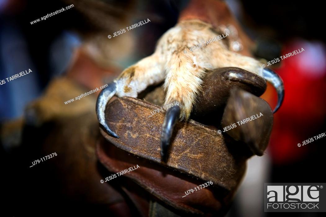 Stock Photo: Raptor leg on falconer's hand.