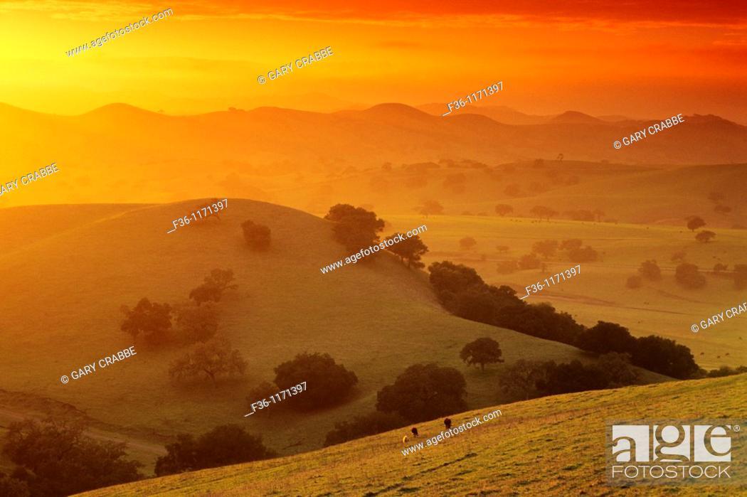 Stock Photo: Sunset in the hills near Los Olivos, Santa Barbara County, California.