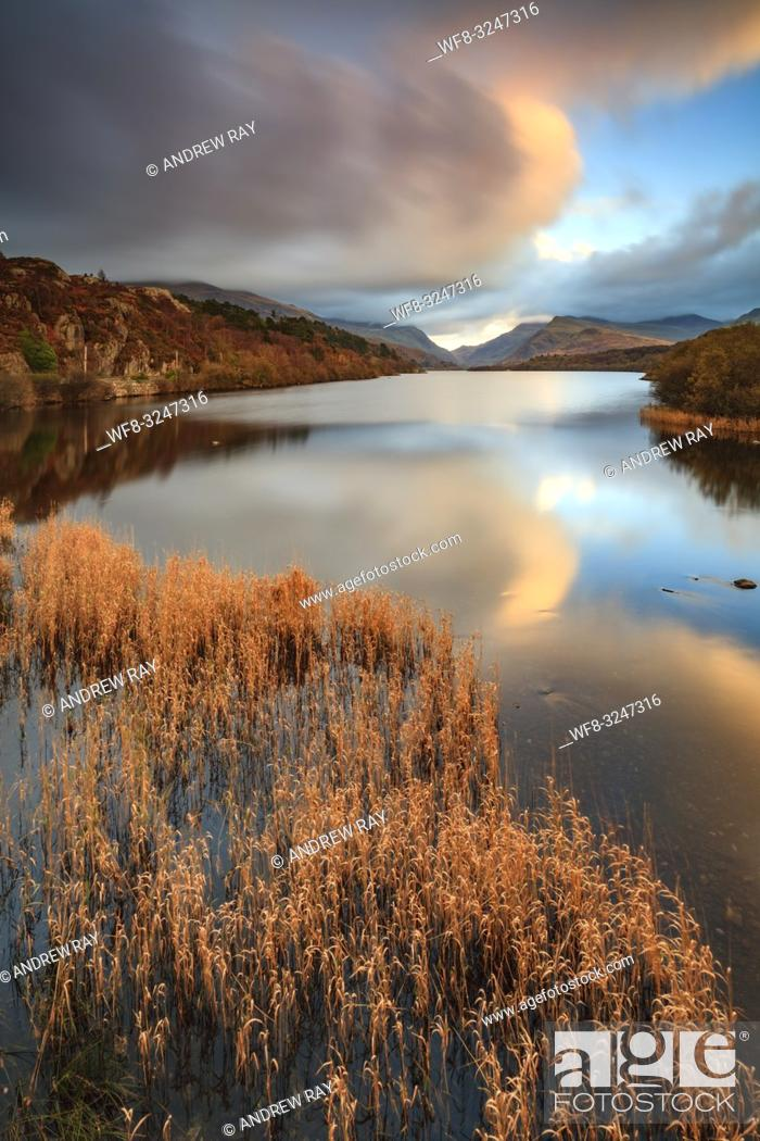 Imagen: Reeds captured at sunset from the Pont Pen-y-Llyn bridge at the north-western end of Llyn Padarn in the Snowdonia National Park in Wales.