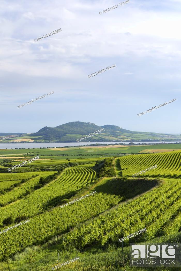 Imagen: Vineyards near Nove Mlyny reservoir with Palava, Southern Moravia, Czech Republic.