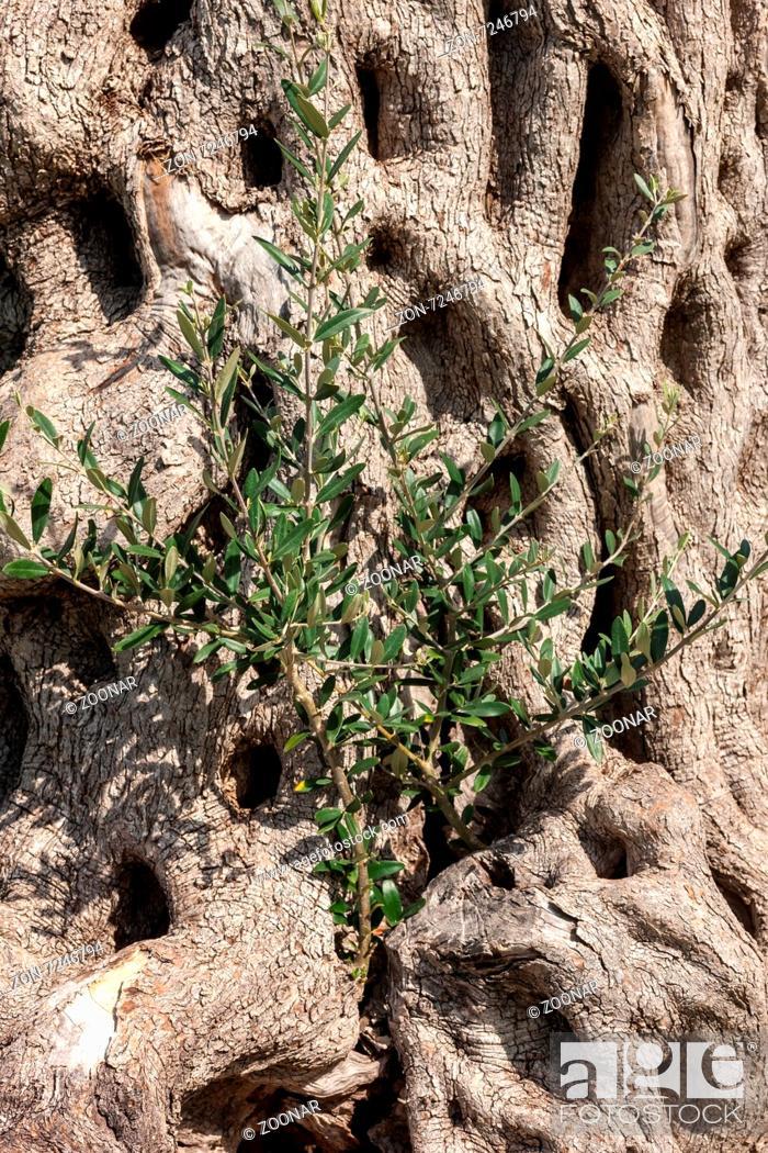 Stock Photo: background of tree bark.