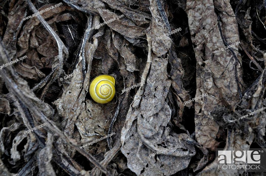 Stock Photo: Yellow snail.