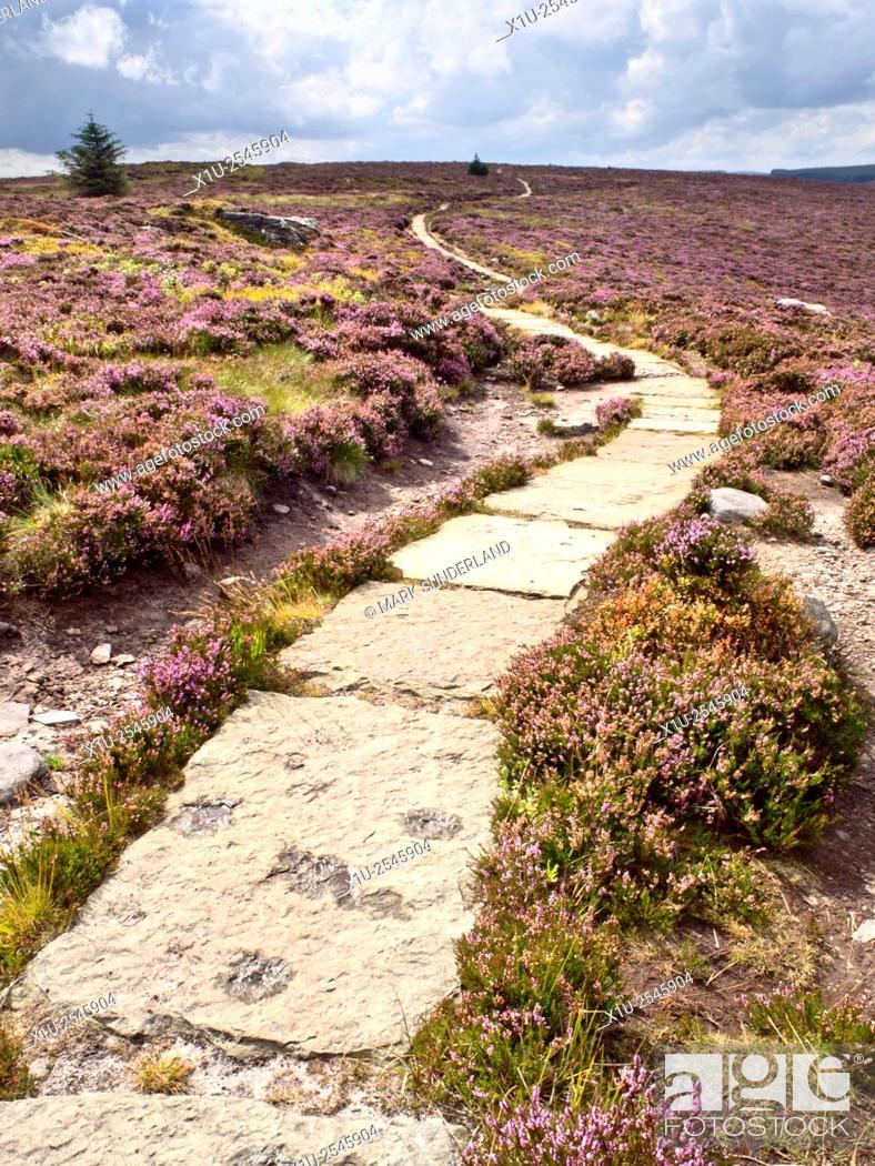 Stock Photo: Stone Flagged Footpath across Heather Moorland in the Simonside Hills near Rothbury Northumberland England.