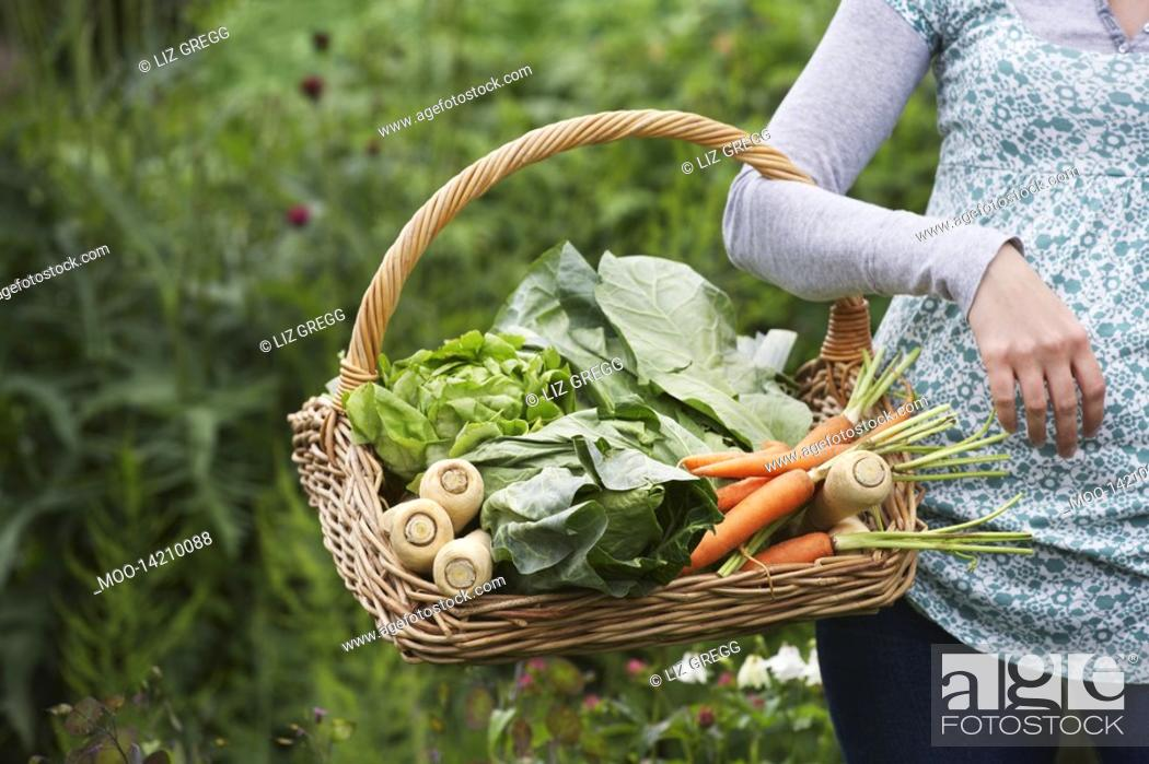 Stock Photo: Woman holding vegetable basket mid section close-up.