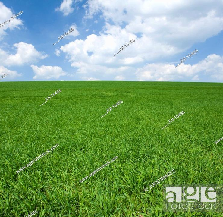 Stock Photo: Field of grass and cloudy sky.
