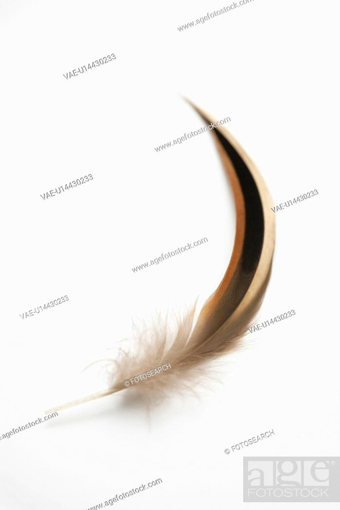 Stock Photo: Feather.
