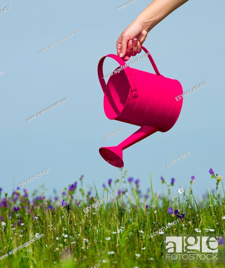 Stock Photo: Watering the flowers.