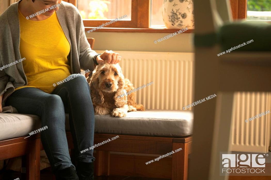 Stock Photo: Pregnant woman caressing dog in living room.