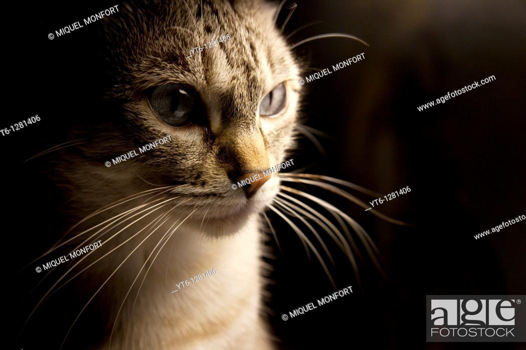 Stock Photo: A cat, Barcelona, Catalonia, Spain.