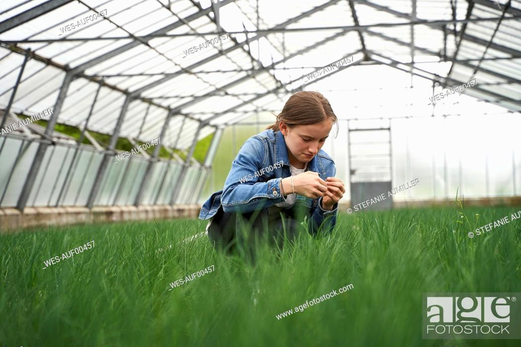 Stock Photo: Girl crouching in greenhouse, examining chives.