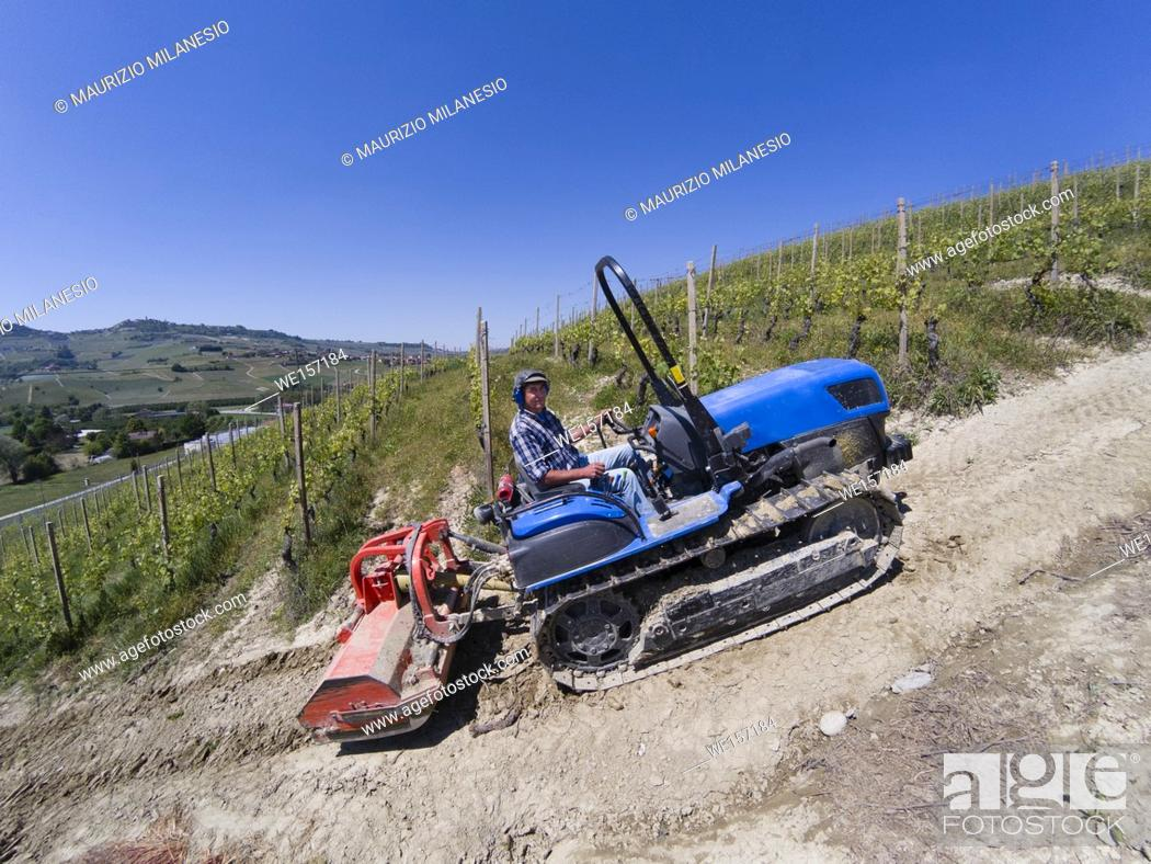 Stock Photo: Driving on a crawler tractor, climbs steeply up the Langhe hills in Piedmont Italy among the rows of vineyards.