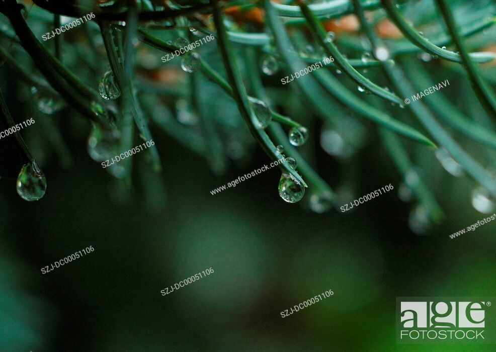 Stock Photo: Leaves with droplets.