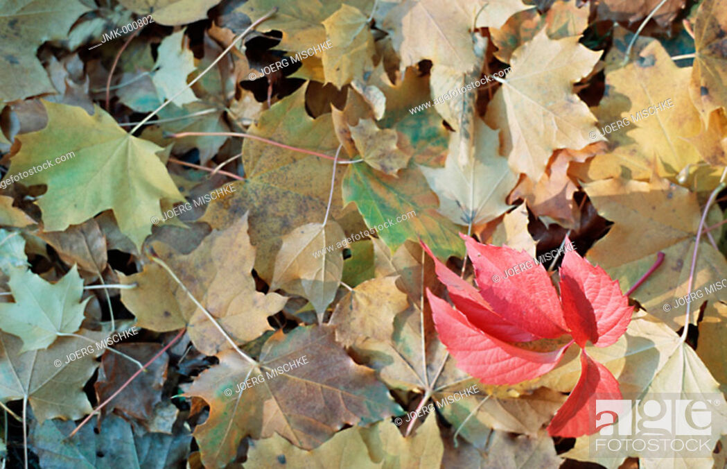 Imagen: Coloured leaves in autumn, lying on the ground.