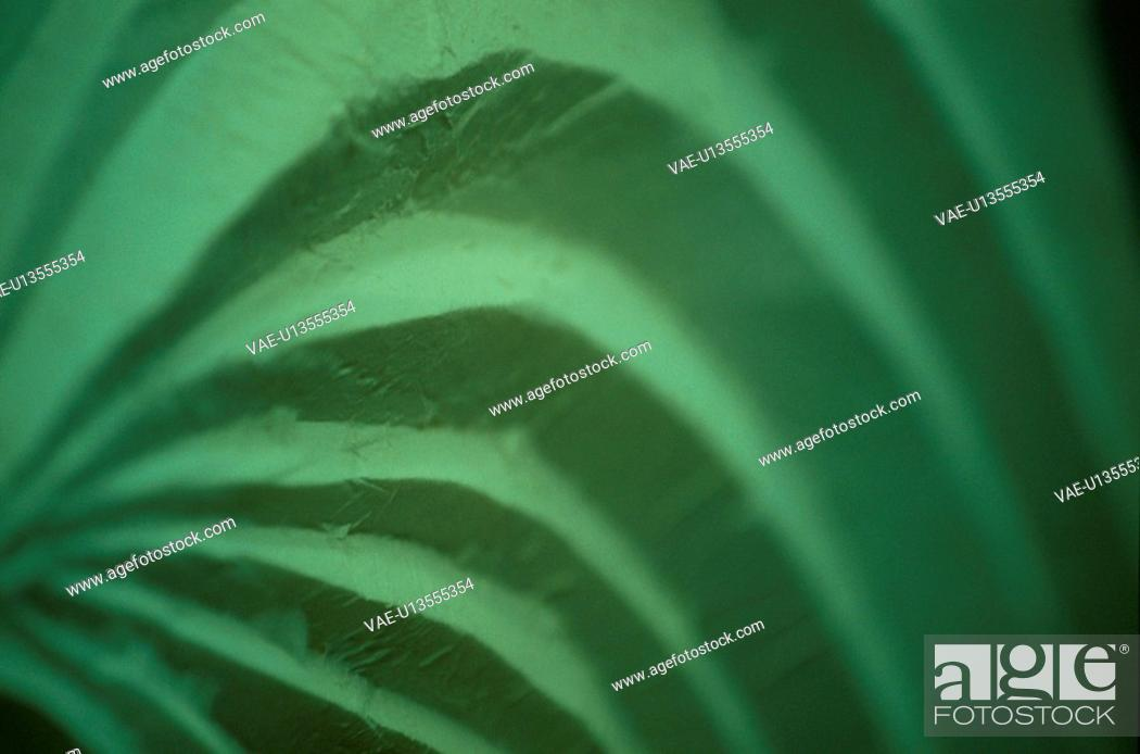 Stock Photo: Green Curved Layers.