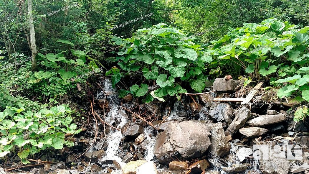 Stock Photo: Waterfall water flowing from mountain forest landscape Fast flowing liquid among the rocks rocks and green tree beech nature.
