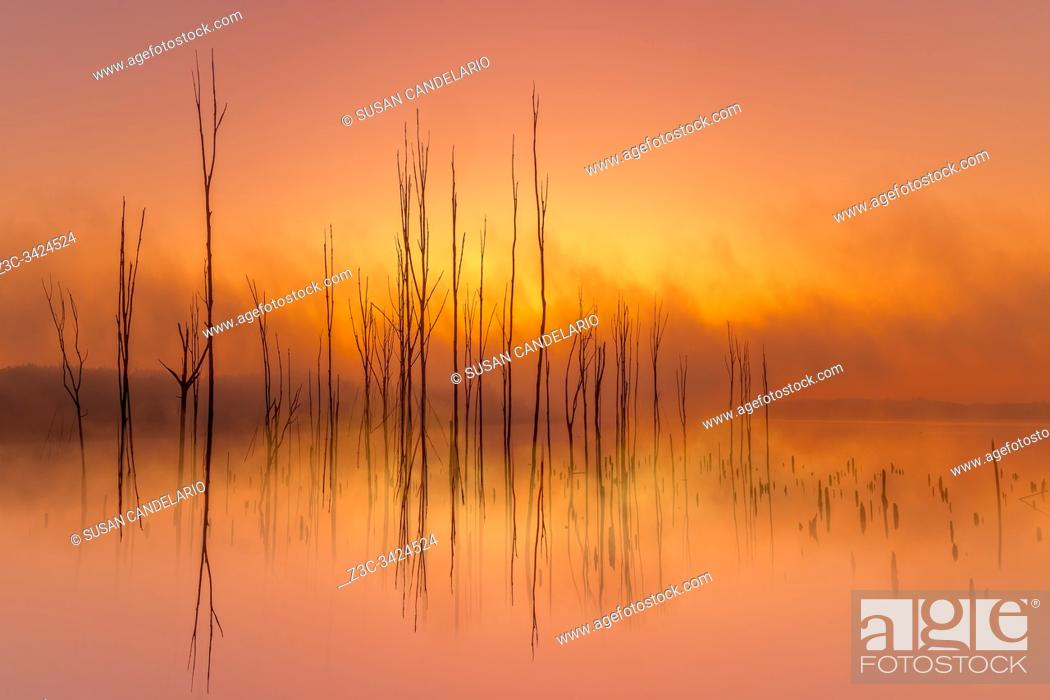 Stock Photo: Dead tree branches begin to emerge through the fog right before the rising sun begins to burn the early mornings fog. . .