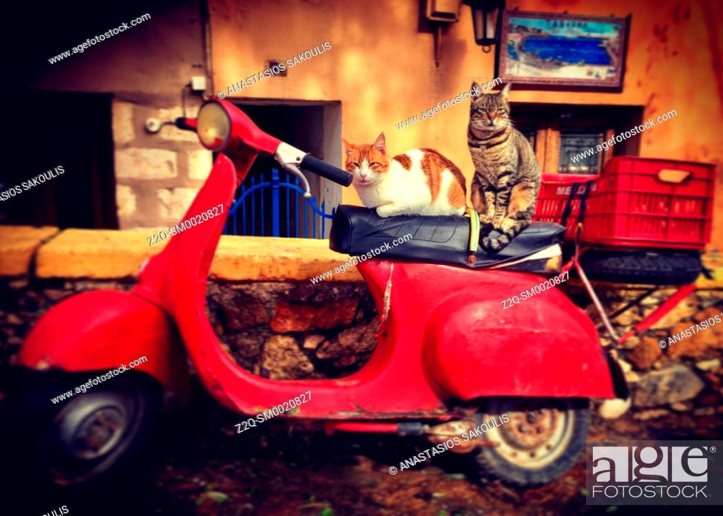 Stock Photo: A cat on an old scooter, Chania, Crete, Greece.