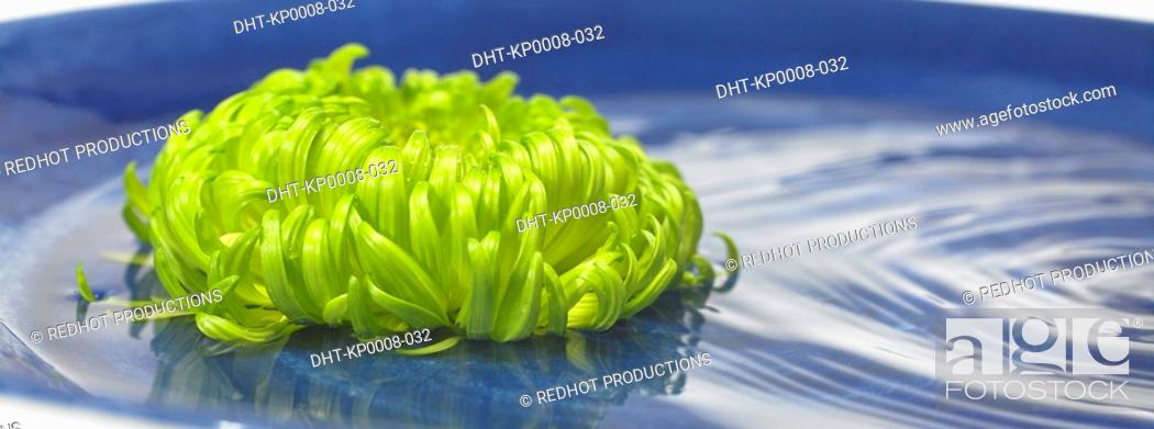 Stock Photo: Green Flower in Water bowl.