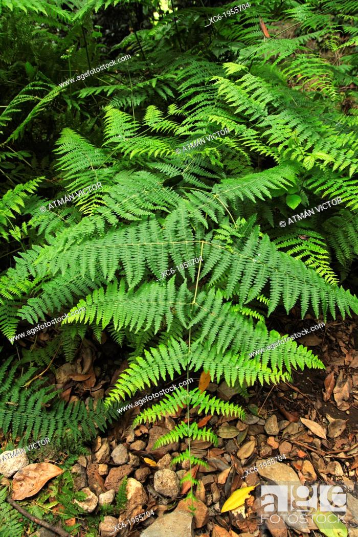 Stock Photo: Close view of ferns in Tenerife island Spain.