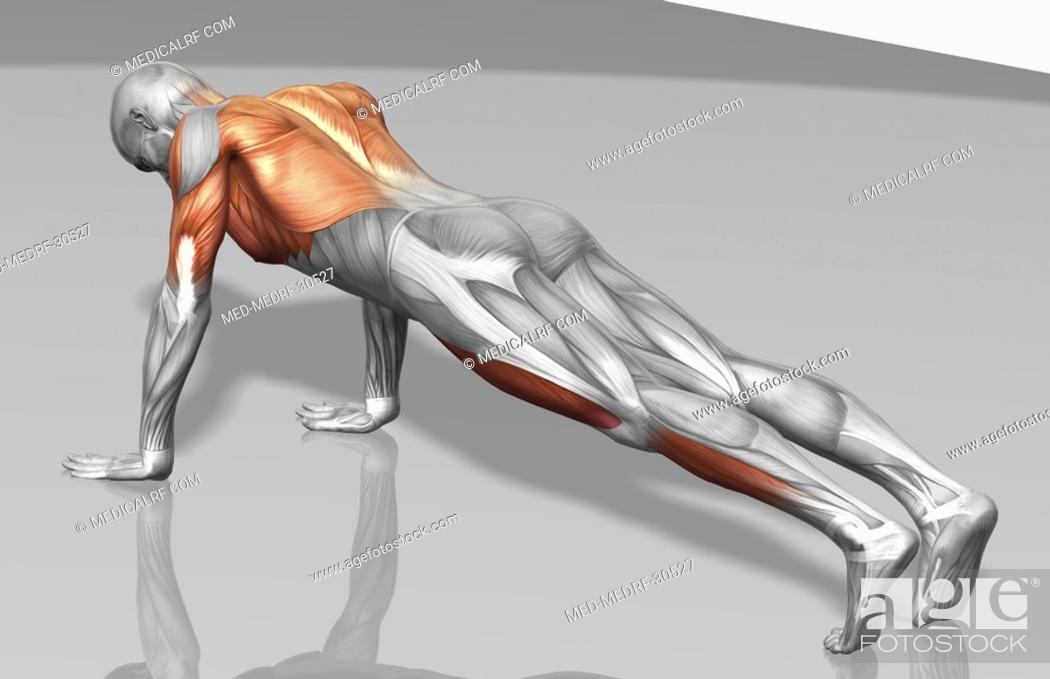 Stock Photo: Push up Part 2 of 2.