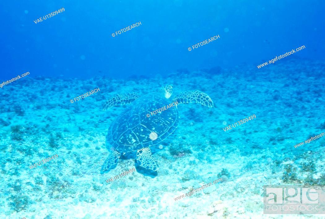 Stock Photo: An Underwater Sea Turtle.