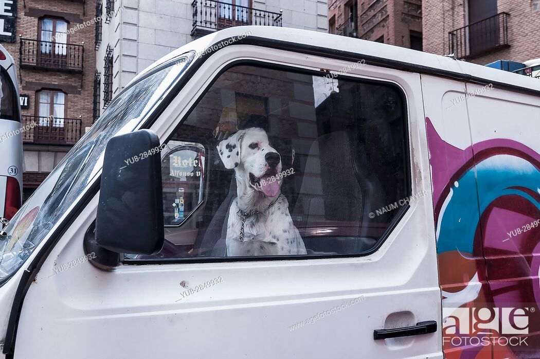 Stock Photo: The dog sits in the car at the driver's seat.