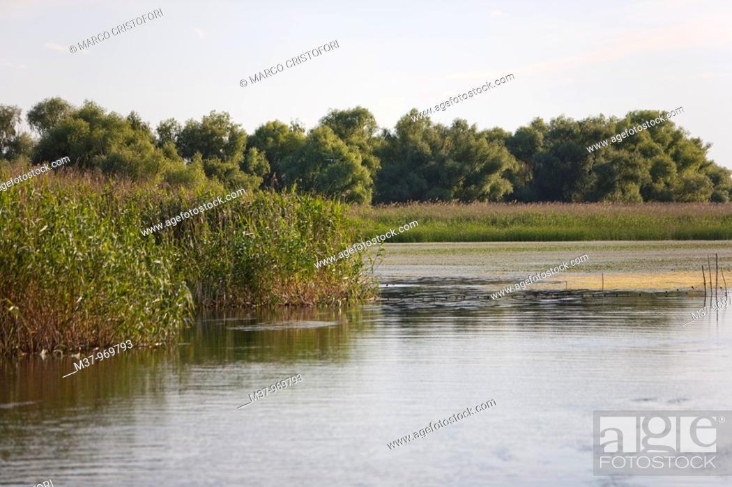 Stock Photo: Danube river delta  Romania.
