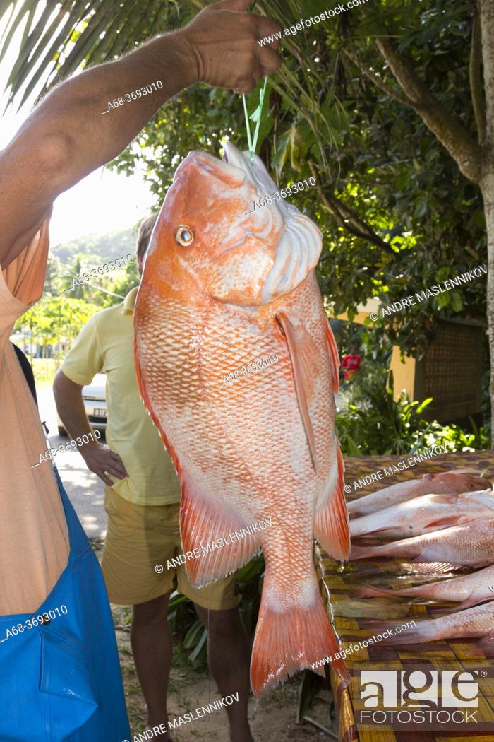 Stock Photo: Red Snapper sold by fisherman in Mahe island, Seychelles.