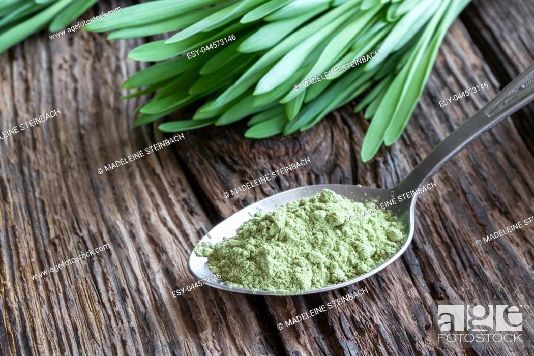 Imagen: Barley grass powder on a spoon with fresh blades in the background.