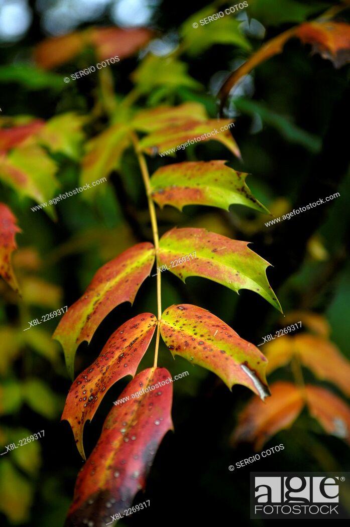 Stock Photo: Leaves, Multicolored.