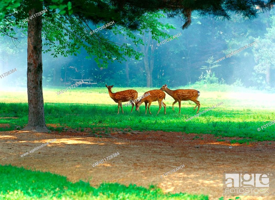 Stock Photo: wood, nature, grass, forest, scenery, flim.