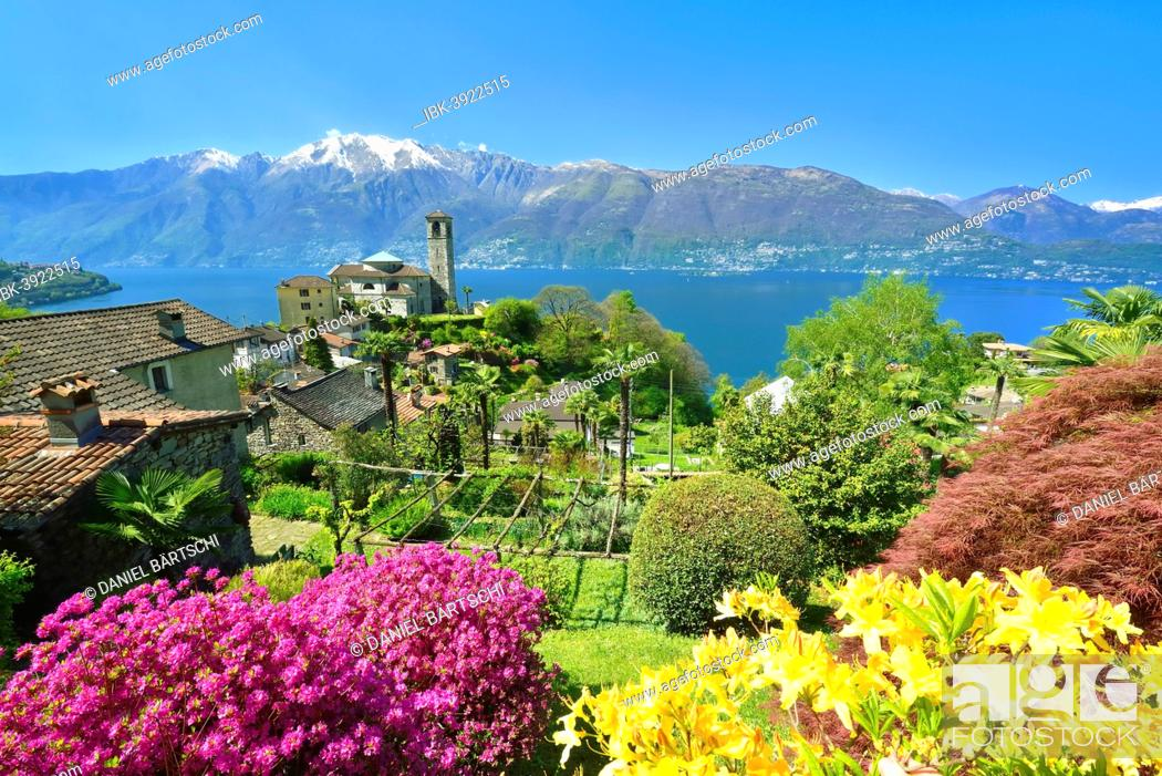 Stock Photo: Sant'Abbondio on Lake Maggiore, Gambarogno, Ticino, Switzerland.