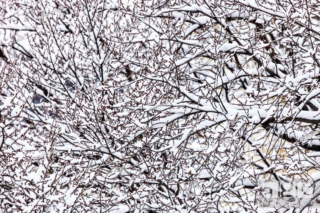 Imagen: Snow on trees.