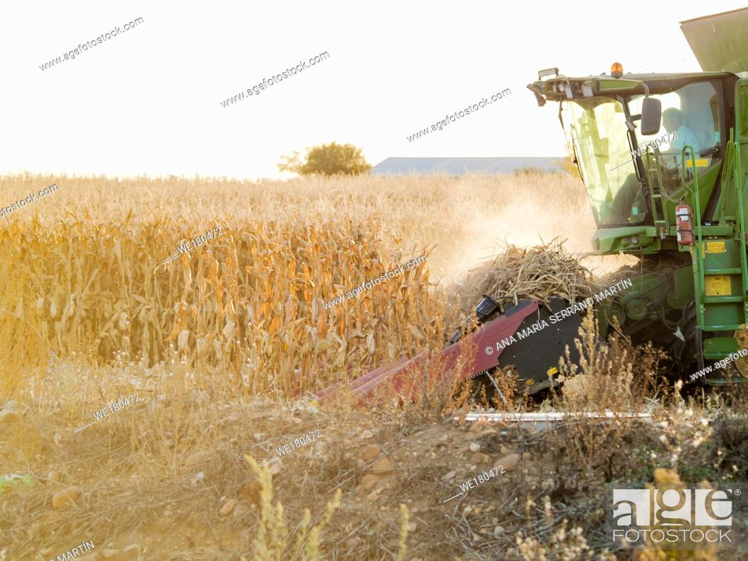 Imagen: A harvesting machine in a field harvesting corn at sunset in autumn in Salamanca (Spain).