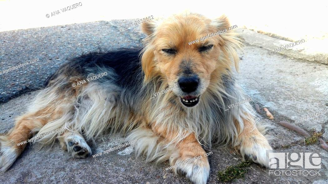 Stock Photo: Pet Macarena, Escurial, Cáceres, Estremadura.