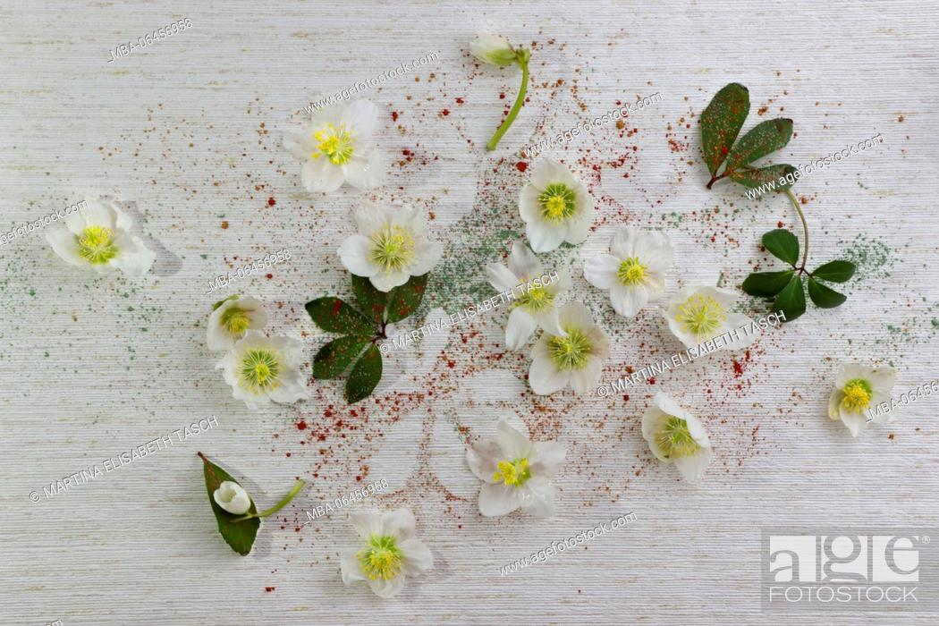 Stock Photo: Arrangement of snow roses on old wallpaper.