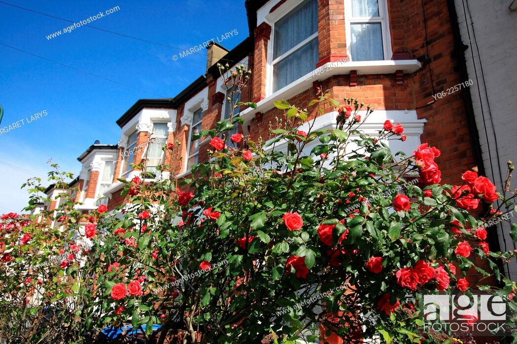 Stock Photo: Beautiful London houses with red roses.