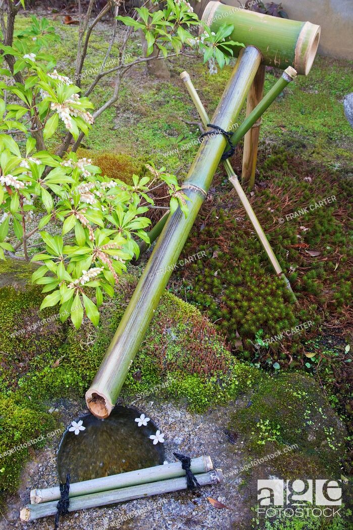 Stock Photo: A bamboo water spout and a stone basin, with cherry blossom petals.