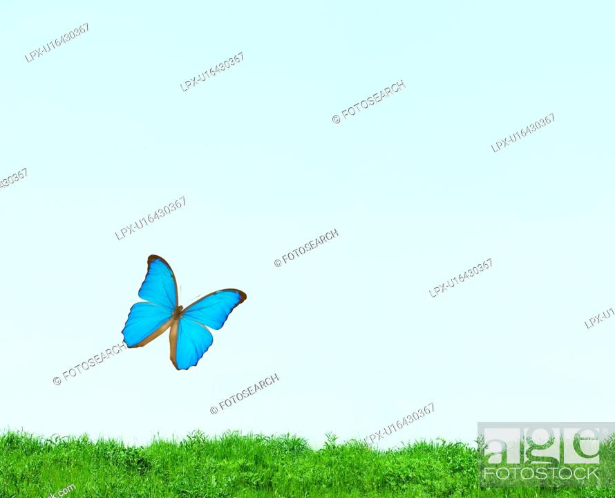 Stock Photo: Butterfly flying, Digital Composite.
